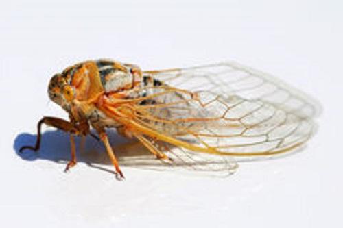 locust-profile-5569608[1]
