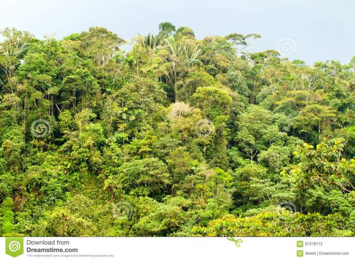 dense-tropical-forest-ecuadorian-amazonia-distance-view-jungle-61378112[1]