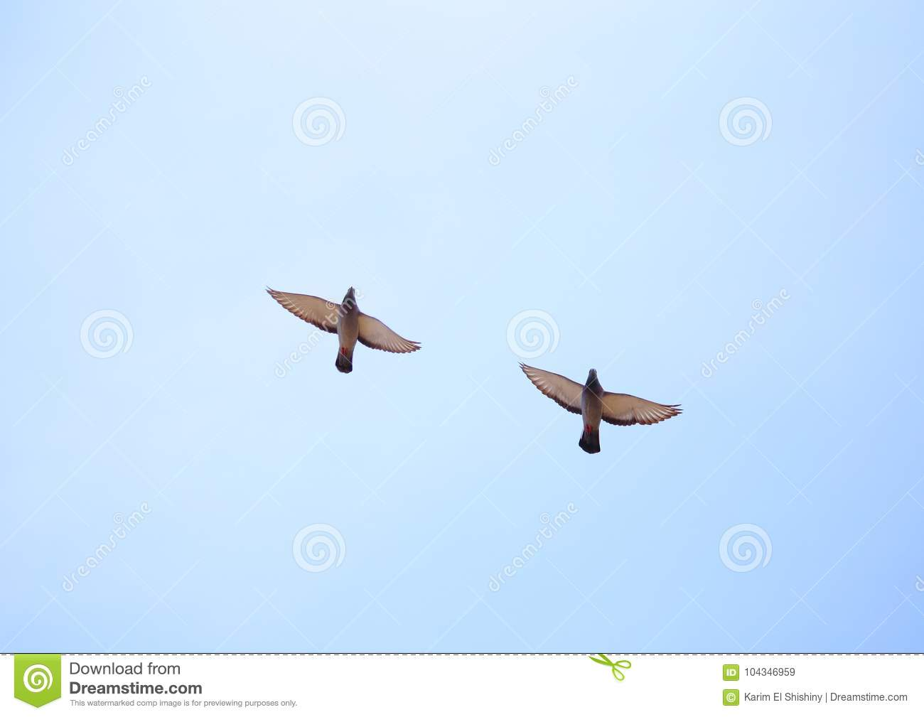 flying-doves-two-together-harmony-interesting-to-see-similarities-difference-feathers-104346959[1]