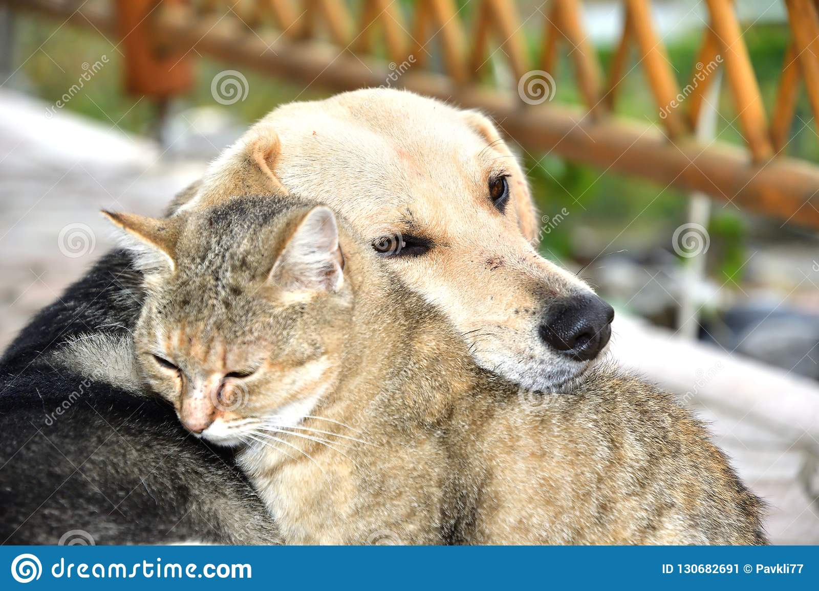dog-cat-to-snuggle-animal-love-best-friends-sleep-as-130682691[1]