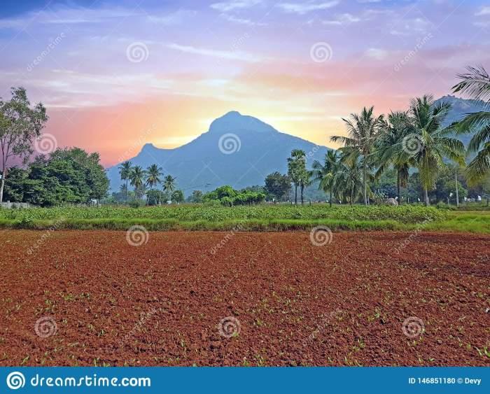 holy-mountain-arunachala-tiruvanamalai-tamil-nadu-india-sunset-holy-mountain-arunachala-tiruvanamalai-tamil-nadu-146851180[1]